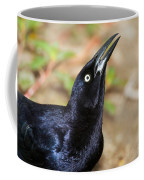 Great-tailed Grackle Coffee Mug