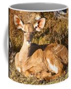 Greater Kudu Calf Coffee Mug