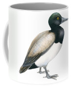 Greater Scaup Coffee Mug by Anonymous