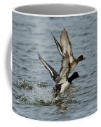 Greater Scaup Pair Coffee Mug