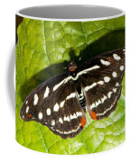 Grecian Shoemaker Butterfly Coffee Mug