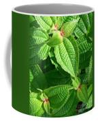 Green And Ruffled Coffee Mug