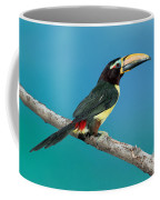 Green Aracari On Branch Coffee Mug