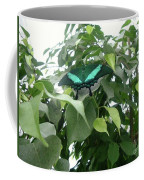 Green Banded Butterfly Coffee Mug