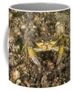 Green Crab Coffee Mug