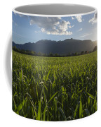 Green Field In Sunset Coffee Mug