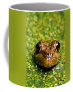 Green Frog Hiding Coffee Mug