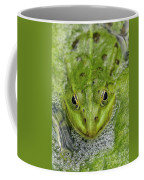 Green Frog Coffee Mug by Matthias Hauser