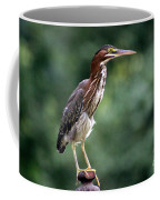 Green Heron 2 Coffee Mug
