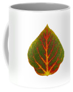 Green Red And Yellow Aspen Leaf 4 Coffee Mug