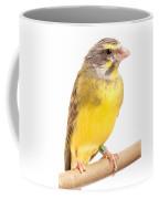 Green Singing Finch Crithagra Mozambicus Coffee Mug