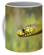 Green Snake. Coffee Mug