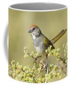 Green-tailed Towhee Coffee Mug