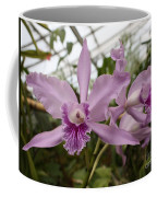 Greenhouse Ruffly Orchids Coffee Mug