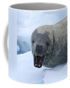Greetings From Antarctica.. Coffee Mug