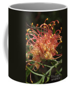 Grevillea  Superb Coffee Mug