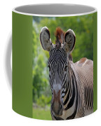 Grevy Zebra Coffee Mug