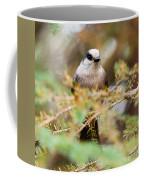Grey Jay Perisoreus Canadensis Watching Perched Coffee Mug