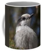 Grey Jay Coffee Mug