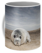 Grey Seal On Beach Norfolk England Framed Print