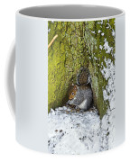 Grey Squirrel With Its Food Store Coffee Mug