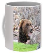 Grizzly Bear 02 Postcard Coffee Mug