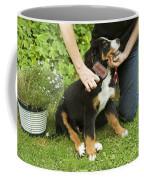 Grooming Bernese Mountain Puppy Coffee Mug