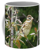 Grosbeak Coffee Mug