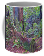 Ground Level Landscape In Armstrong Redwoods State Preserve Near Guerneville-ca Coffee Mug