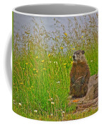 Groundhog At Point Amour In Labrador Coffee Mug