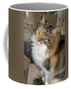 Grumpy Kitty With Emerald Eyes Coffee Mug