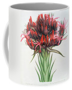 Gymea Lily Coffee Mug