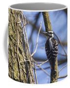 Hairy Woodpecker - Female Coffee Mug