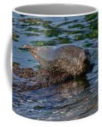 Harbor Seal At Low Tide Coffee Mug
