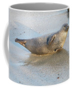Harbor Seal Coffee Mug