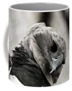 Harpy Eagle Closeup Coffee Mug
