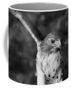 Hawk Attack Black And White Coffee Mug