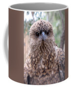 Brown Hawk Face Profile Coffee Mug