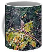 Hawk On A Limb Coffee Mug