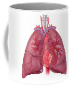 Heart Illustration, With Pulmonary Veins Coffee Mug