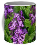 Heliotrope Flowers In Bloom Coffee Mug