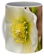 Helleborus 5 Coffee Mug