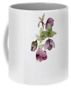 Helleborus Atrorubens Coffee Mug by Sarah Creswell