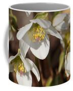 Helleborus Niger - Christrose Coffee Mug