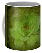 Hen And Chicks Plant Coffee Mug