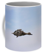 Hen Northern Pintail In Flight Coffee Mug