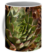 Hens And Chicks Sedum 1 Coffee Mug