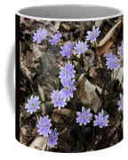 Hepatica Coffee Mug