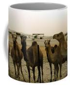 Herd Of Camels In A Farm, Abu Dhabi Coffee Mug