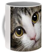 Here Kitty Kitty Close Up Coffee Mug